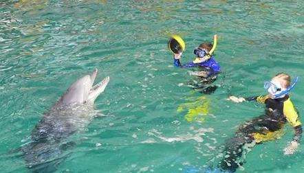 Плавание с дельфинами. Дети и дельфин играют с мячом