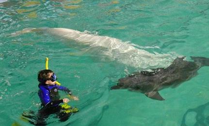 Дети плавают в бассейне с белухой (4,5 м длиной)