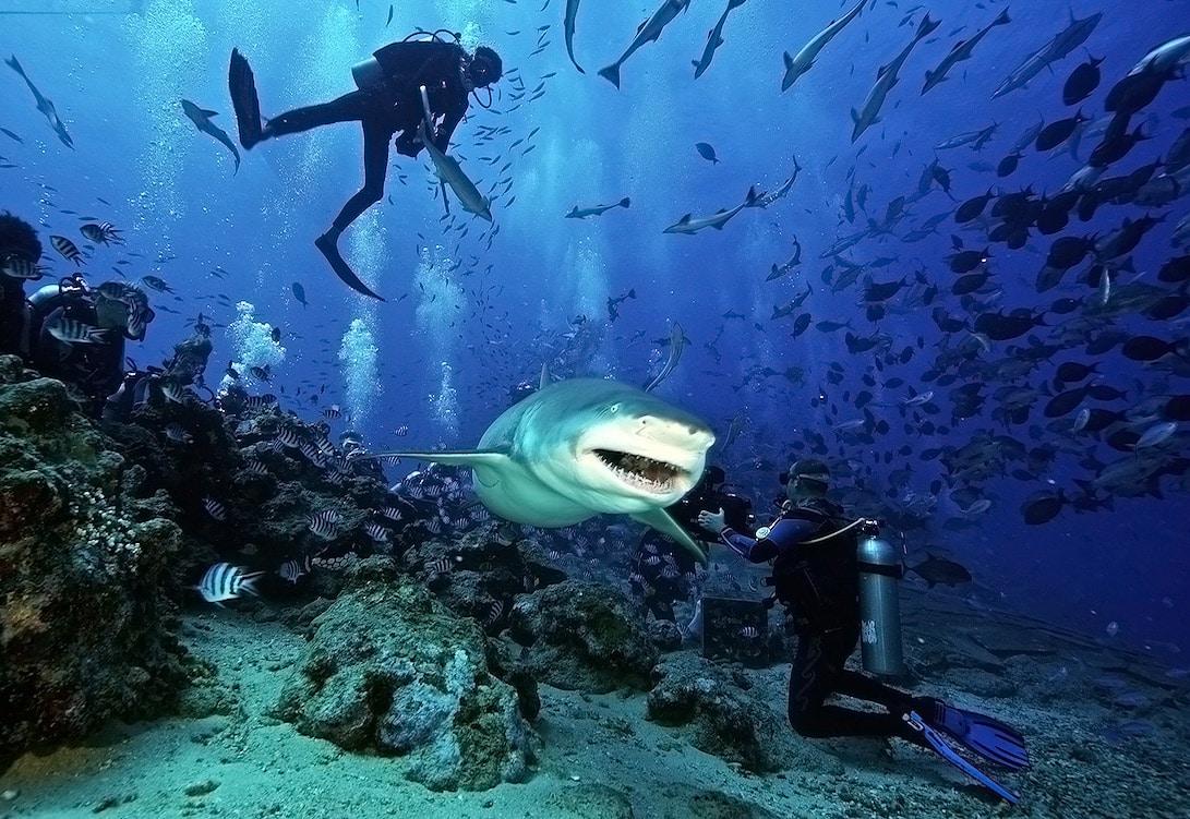 дайвинг с акулами - предостережения