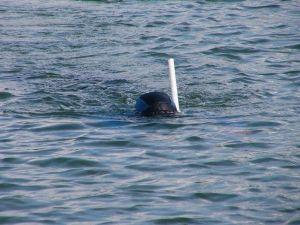 Плавание с трубкой для дыхания (правда о подвиге Сцилиуса)