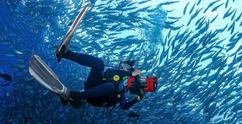 Курс Underwater Photohunter позволяет получить навыки подводной фотосъёмки