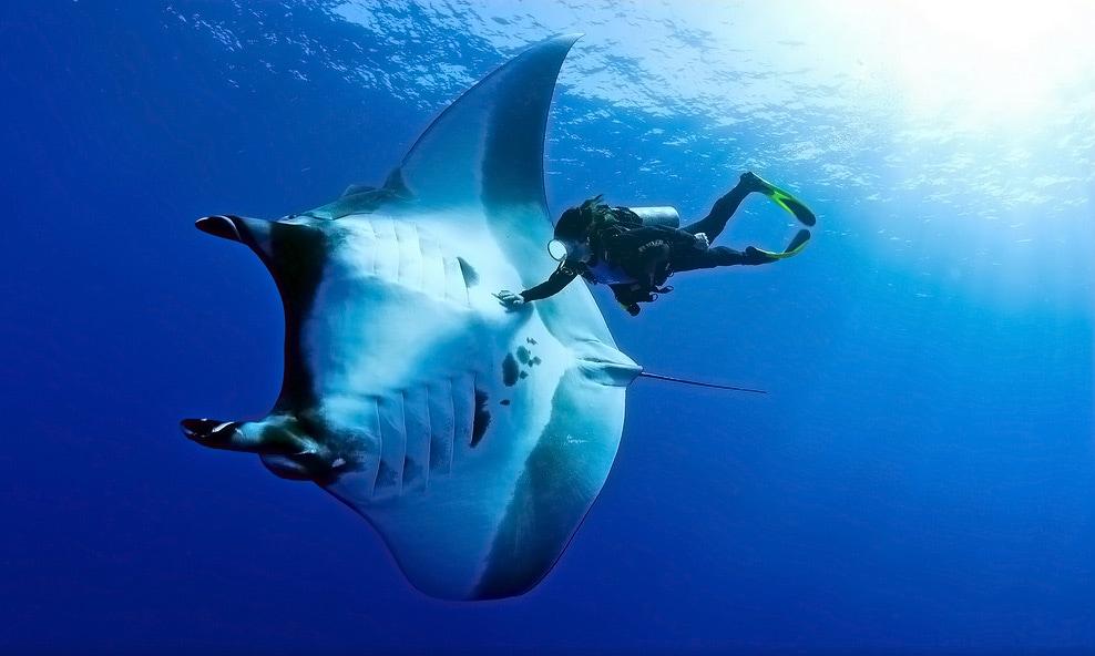 Diver NDL, обучение дайвингу, сертификат дайвера