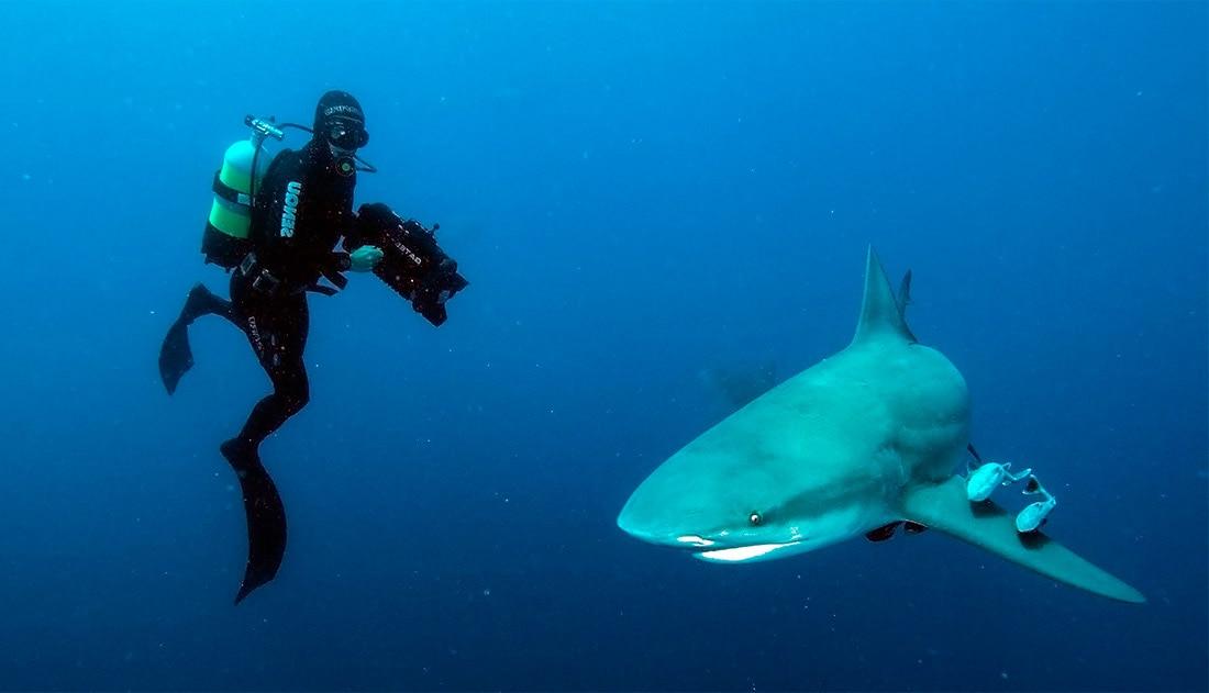 Особенности дайвинга с акулами